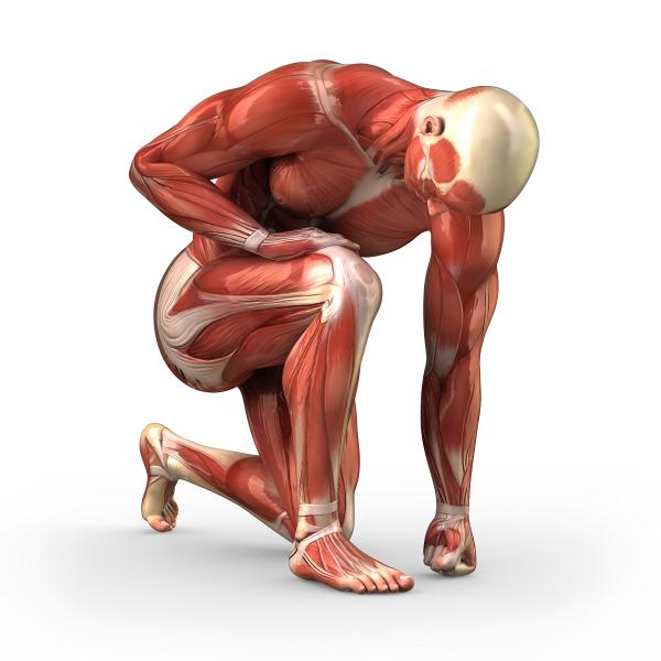 """No artigo científico que escrevi e publiquei em 2015, no Journal of Bone and Joint Surgery, intitulado """"ACL Graft Position Affects in Situ Graft Force Following ACL Reconstruction"""", mostro que a colocação do enxerto na posição anatômica, por meio de artroscopia, reproduz mais fidedignamente as forças que passam pelo ligamento do que na posição isométrica."""
